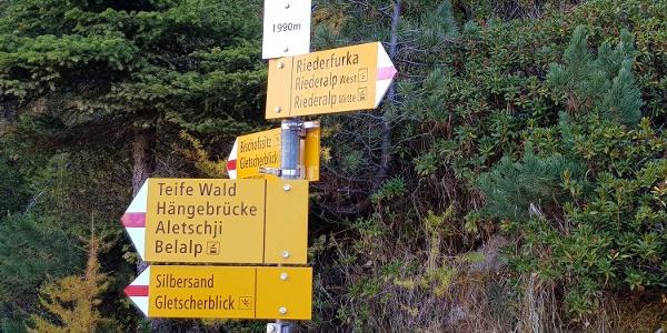 Wanderung von der Riederalp via Aletschwald zu den Chatzulechern