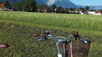 Blick auf das Alpspitz-, Zugspitzgebirge