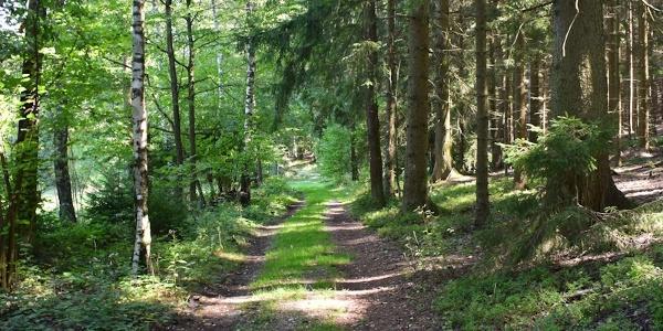 Schöne Waldwege warten