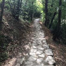 Shady paths