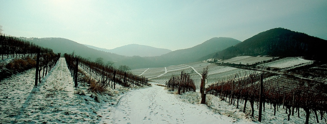 Die Pfälzer Weinberge im Winter