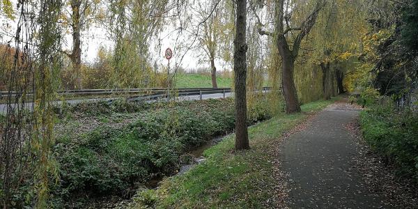 An der Eifelstraße - am Riffersbach unter Trauerweiden