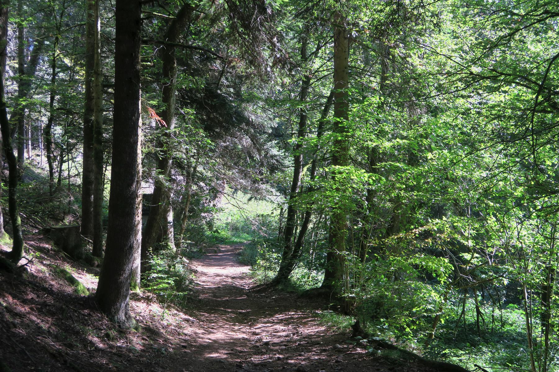 ...und bald in den Wald.