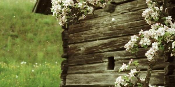 Arriacher Bauernhütte im Frühling