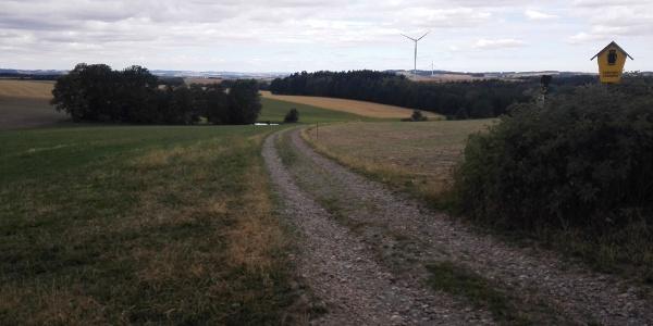 Feldradrunde, Blick zum Beuthenbachwald