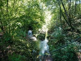 Foto Wilde Landschaft am Krippenbach bei Kleingießhübel