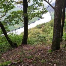Blick von der Schutzhütte Piesport