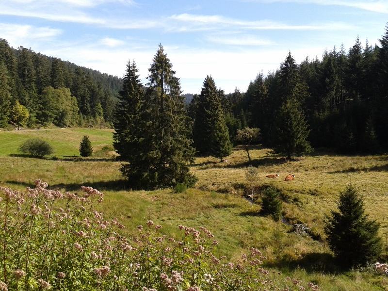 Bad Wildbad Naturromantiker-Tour