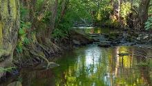 NaturWanderPark delux: Bach-Pfad (Bleialf)
