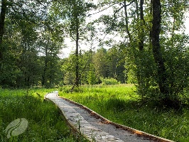 Bohlenstege führen durch den Wald (Foto: Volker Teuschler / CUBE, Quelle: Zweckverband Naturpark Südeifel)