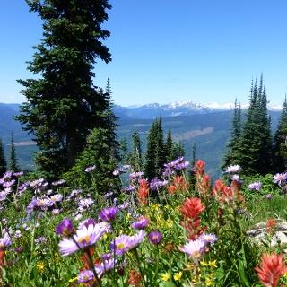 Blumenpracht am Mount Revelstoke