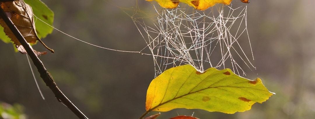 Spinnweben im Herbstlaub