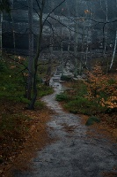 Foto Im Schrammsteingebiet