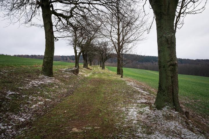 Foto Lindenweg (Winterwanderroute Mit Hunger zum Unger Nr. 29)