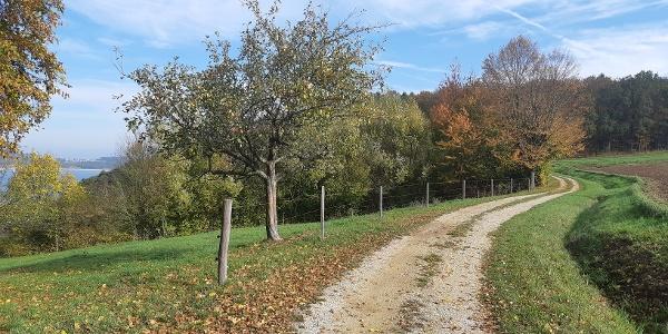 Obstbäume am Weg