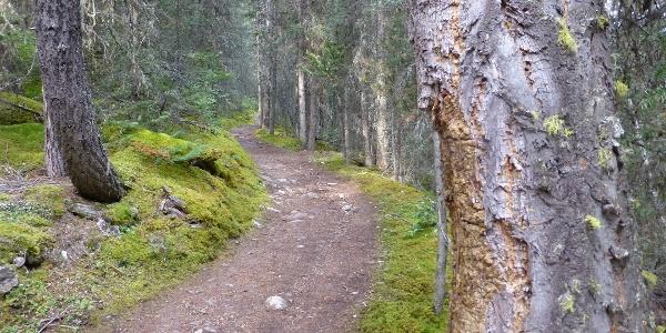 Am Bourgeau Lake Trail.
