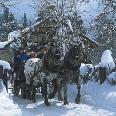 Pferdeschlittenfahrt zu den Hofalmen