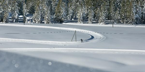 Langlaufen inmitten der Sörenberger Winterwelt