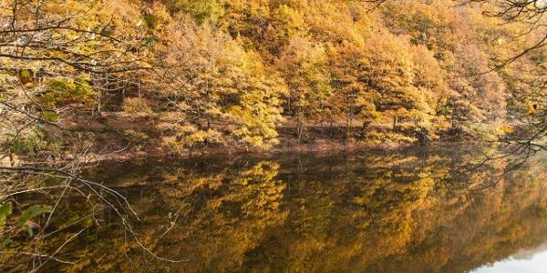 Der Herbst präsentiert die Eifel wie in einem expressionistischen Gemälde.