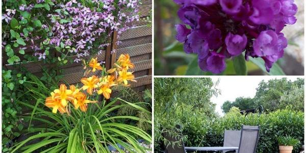 Gartenimpressionen 2