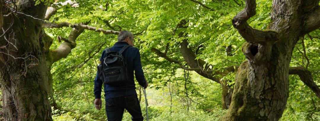 Wandern durch bizarre Laubwälder