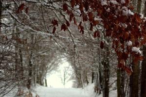 Foto Winterwanderweg Drei-Steine-Route