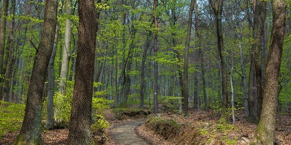 Erdőrészlet a Vörös-kereszttől délre