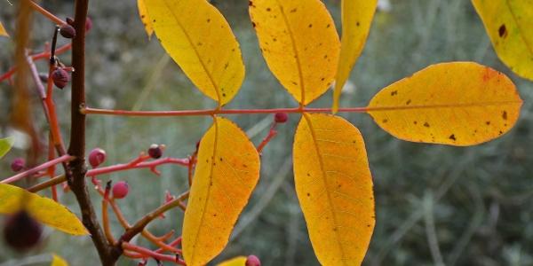 Herbst am Treis Elies Nature Trail