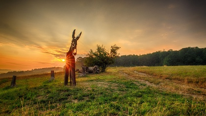 Stahlesel bei Sonnenaufgang