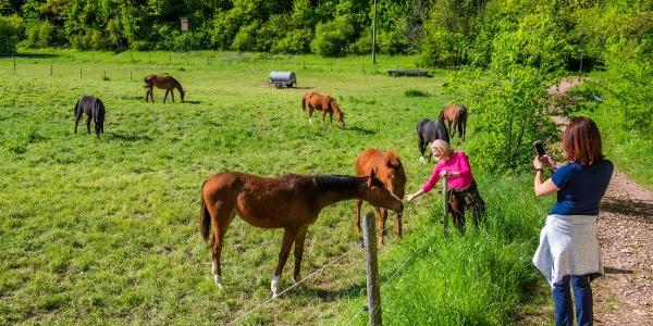Wanderer an Pferdeweide
