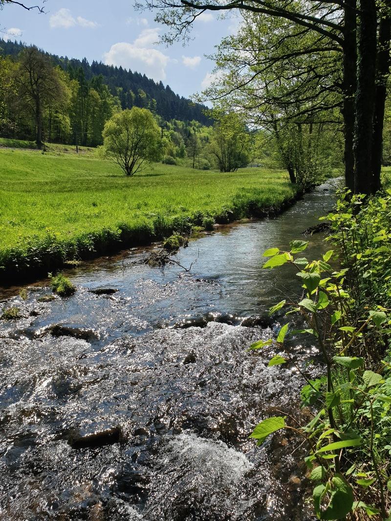 Graf-Rhena-Weg (Albtalweg)