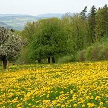 Blumenwiese auf dem Achenberg