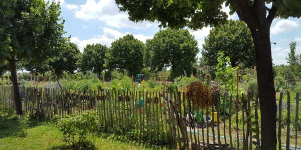 Urban Gardening am Kaisermühlendamm