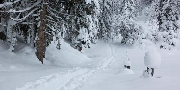 im Wald ist noch gute Sicht, - und frisch gespurt!
