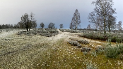 Die Trupbacher Heide in Winterstimmung