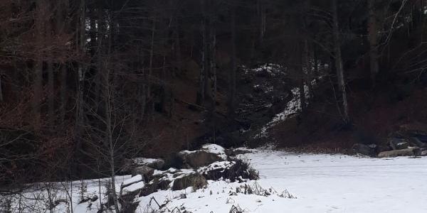 Waldweg - bei mir leider kaum Schnee