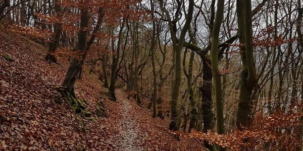 Wanderpfad vom Ziegenberg zum Teufelsgraben