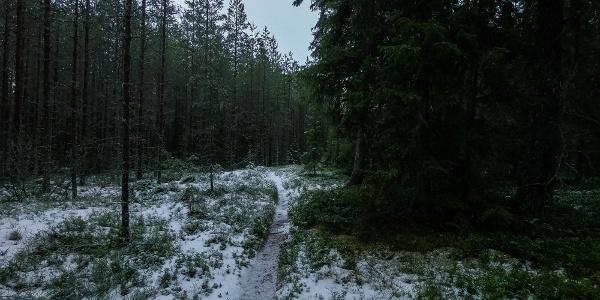 Path in Storsand, Monäs