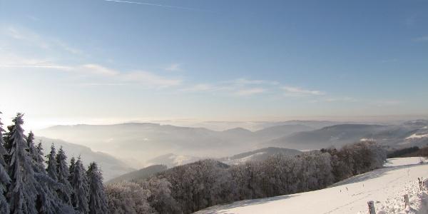 Wildewiese im Schnee