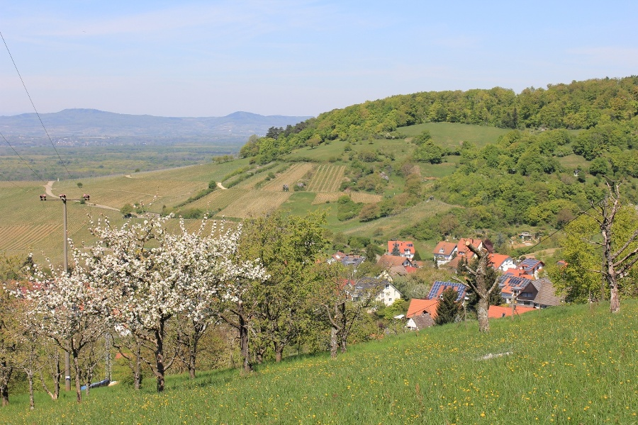 1.Durch Wiesen,Reben und Wald der Schönberggruppe südlich von Freiburg