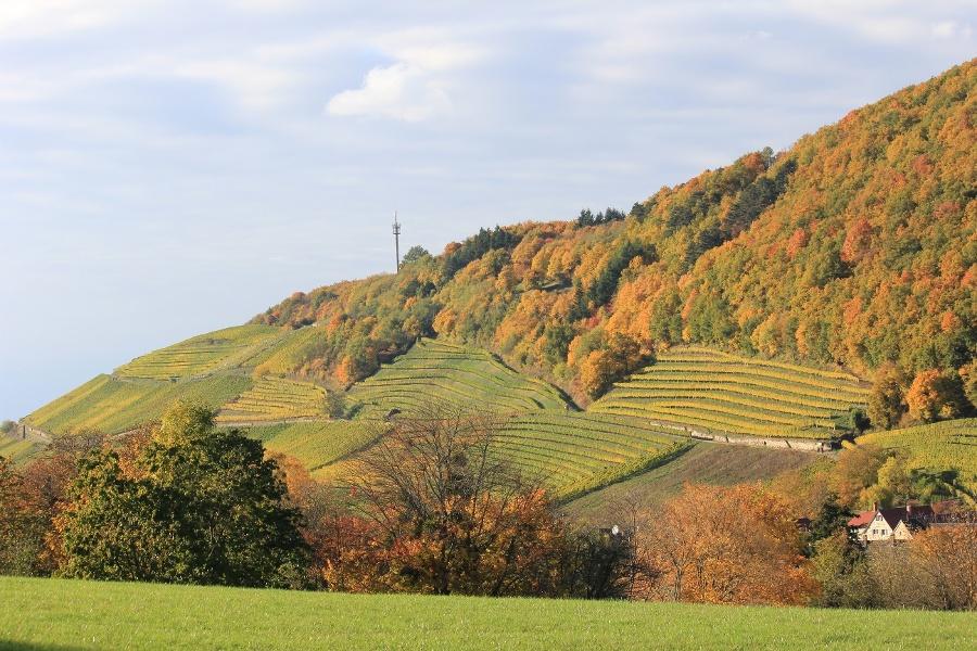 6.Von der Schwärze bei Badenweiler rund um den Innerberg