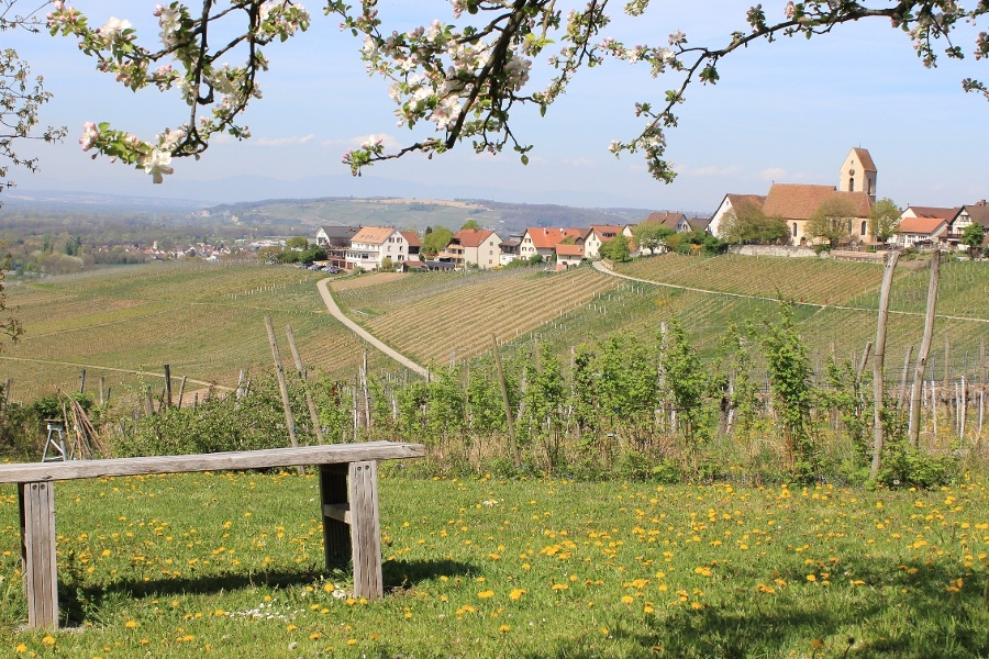 8.Entdeckungstour in den südlichen Weinbau-Einzellagen Deutschlands