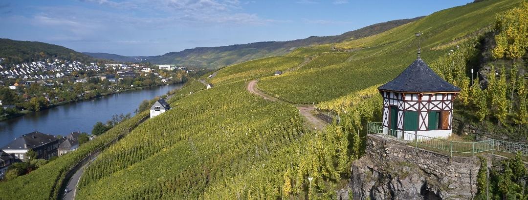 Wijngaarden bij Bernkastel-Kues