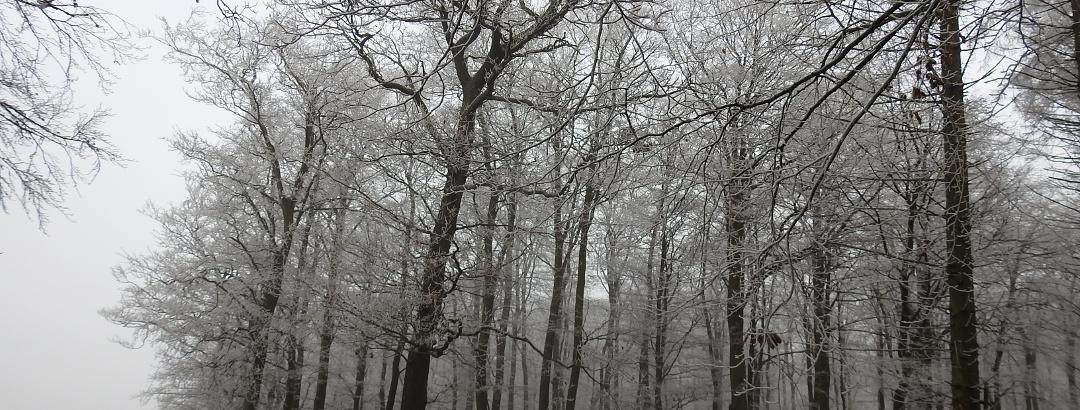 Schierholzberg nach eisigem Nebel