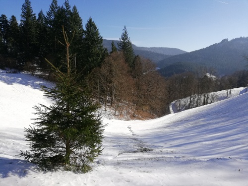 "Bad Peterstal-Griesbach | Winterwandertour ""Dollenberg"""