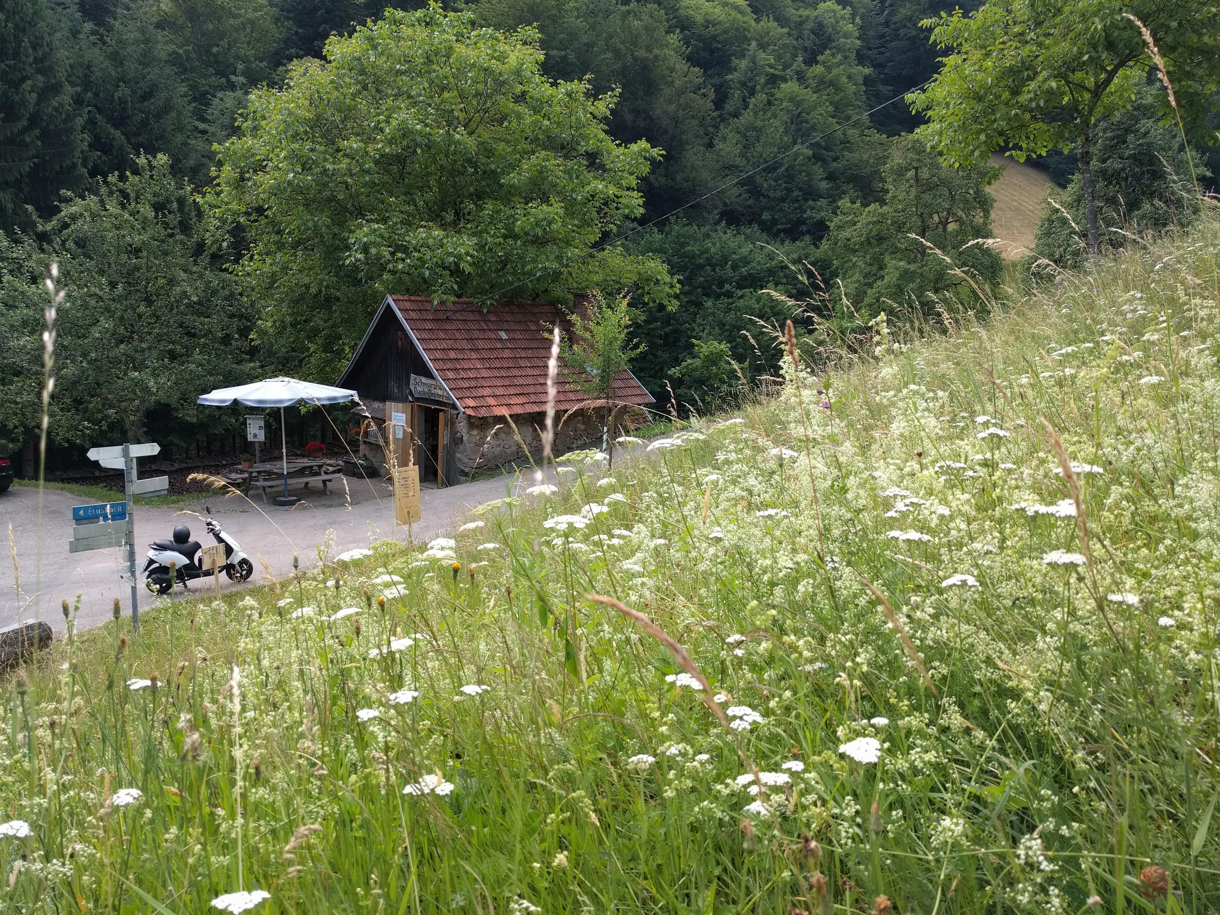 Blumenwiesen im Ernsbach