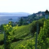 Schönste Weinsicht Badens