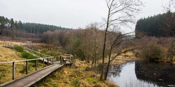 Der Bohlensteg und der Teich des Moorpfads Dahlem