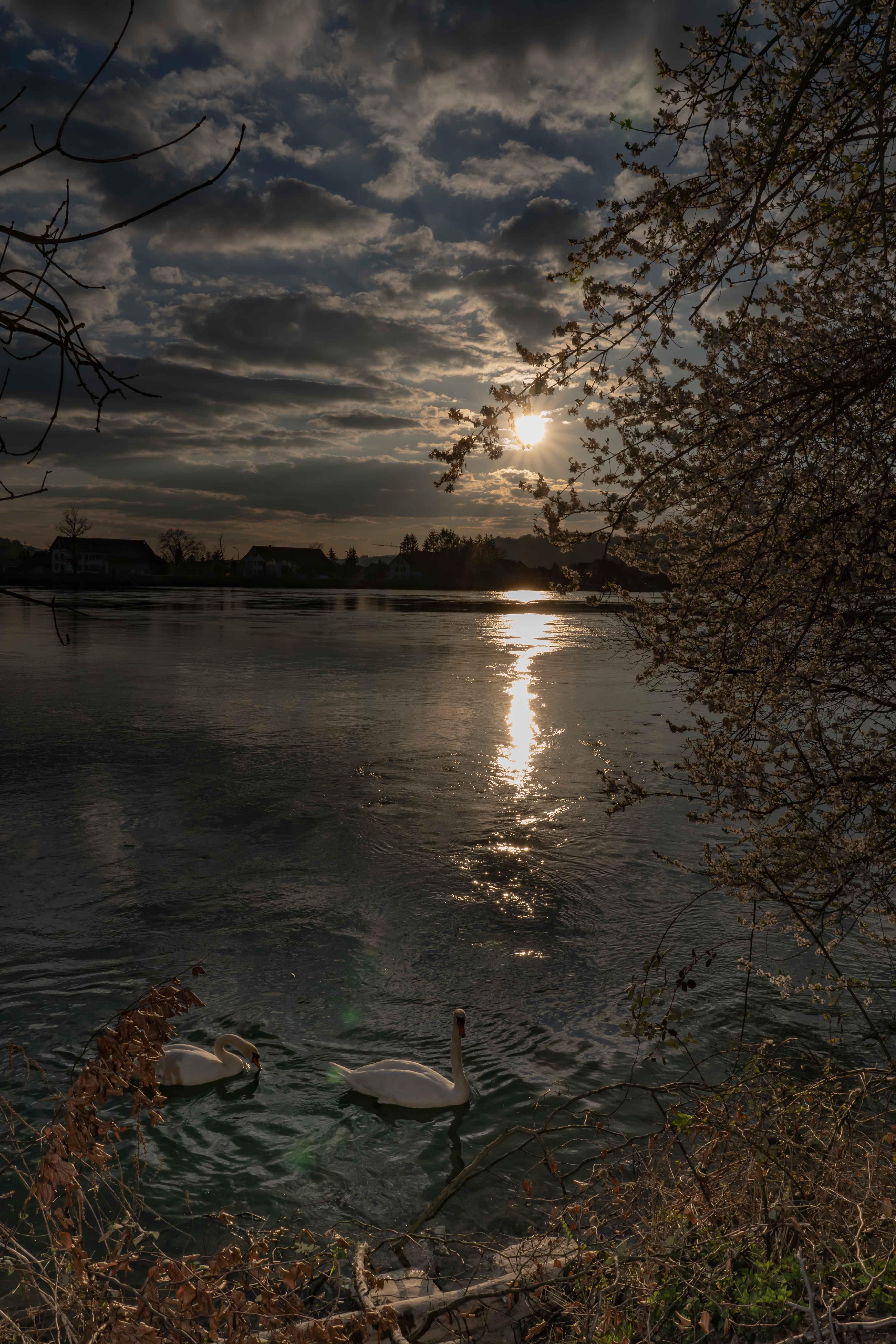 Abendstimmung am Rheinufer