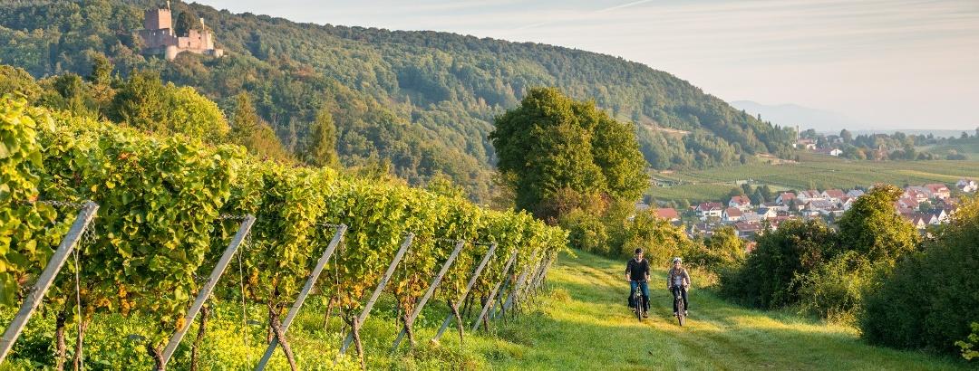 Radtour duch die Weinberge bei Klingenmünster